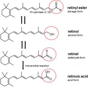 formas químicas de vitamina A: retinol, retinal y ácido retinoico
